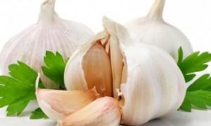 garlic-350x250