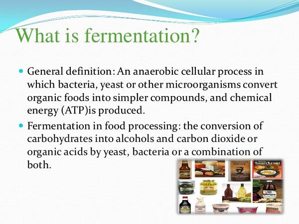 fermentation-600