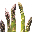 <thrive_headline click tho-post-12603 tho-test-118>4 Reasons Asparagus Tops My Veggie List</thrive_headline>