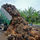 4 Reasons Not to Touch Palm Oil with a 10 Foot Pole
