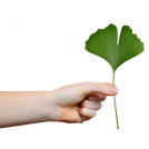 <thrive_headline click tho-post-13942 tho-test-150>10 Things to Know About Ginkgo Biloba</thrive_headline>