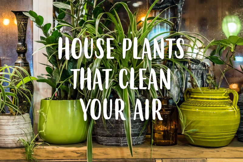 house plants in green vases