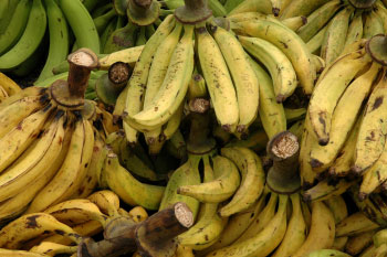 plantains weight loss