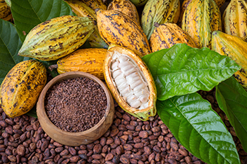 raw cacao seeds plant boosts health