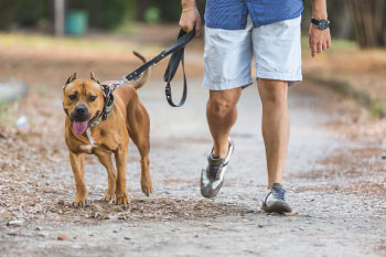 man walking dog reasons-pet-owners-healthier
