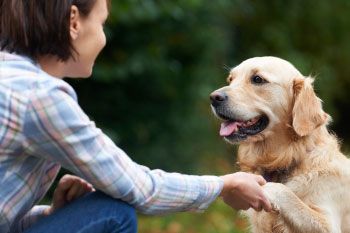 woman shaking paw of golden retriever in park reasons-pet-owners-healthier