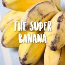 <thrive_headline click tho-post-43087 tho-test-296>ThisSuper Banana will Out-Banana Your Banana</thrive_headline>