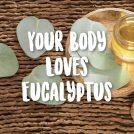 <thrive_headline click tho-post-43114 tho-test-300>8 Ways Eucalyptus Oil Heals Your Body</thrive_headline>