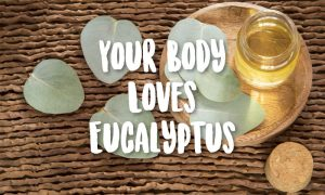 eucalyptus leaves and oil