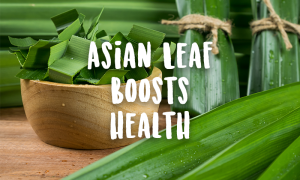 <thrive_headline click tho-post-44209 tho-test-318>Asian Leaf Relieves Pain & Anxiety, Controls Diabetes & Blood Pressure</thrive_headline>