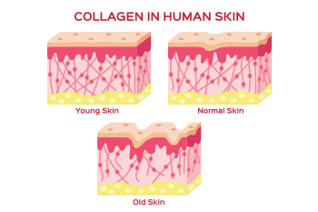 illustration collagen human skin prevent wrinkles