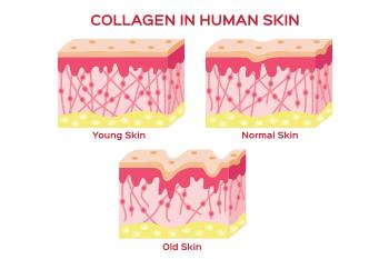 illustration collagen human skin prevent wrinkles