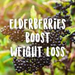 elderberries boost weight loss immune system